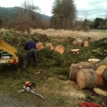 Many ways to purchase your firewood. Quality wood, quality service.