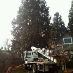 Work over houses is accomplished safety and faster with our boom truck.