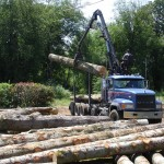We help a lot of home Bellingham owners offset the cost of their tree service by being able to get their logs to the mill